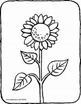 Sunflower Coloring Colouring Pages Drawing Ausmalbild Common Flowers Kiddicolour Field sketch template