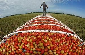 MEXICO MANGO MAFIA L A TIMES UNCOVERS MEXICO FARMING