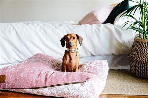 crushed velvet dog beds  nice digs dog milk