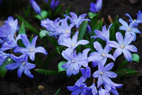 Pavasara puķes   Gunars Bikmanis Gallery