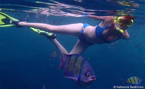 Snorkeling Thailands Ko Phi Phi Islands Travel The World