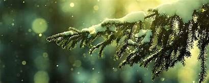 Winter Monitor Dual Wallpapers Christmas Screen Tree