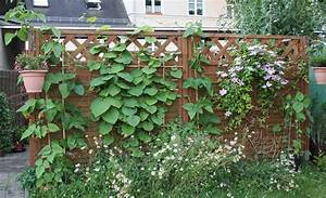 Welche Pflanzen Als Sichtschutz : elegant welche kletterpflanze als sichtschutz einzigartige ideen zum sichtschutz ~ Markanthonyermac.com Haus und Dekorationen