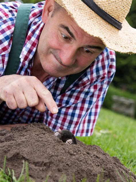 Maulwurf Im Garten So Laesst Er Sich Vertreiben maulwurf im garten so l 228 sst er sich vertreiben bauen de
