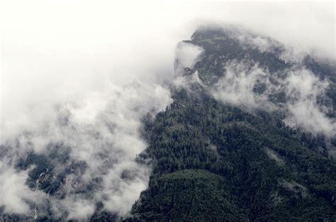 images tree nature forest cloud sky fog mist