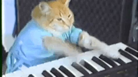 Cat Playing Piano Meme - keyboard gif find share on giphy