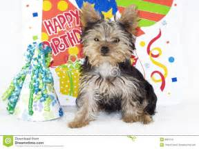 Happy Birthday Yorkie Puppies