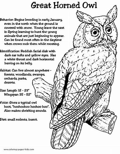 Owl Coloring Pages Horned Owls Facts Animal