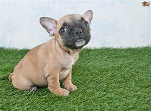 10 of the most popular small dog breeds within the UK ...