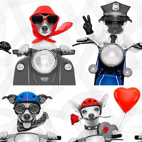 Animal Themed Wallpaper - themed wallpaper animal pug puppy various