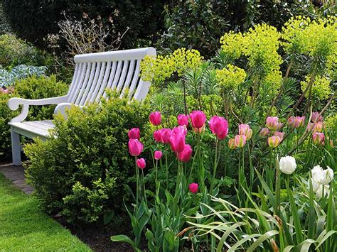 8 tips for growing the best tulips saga