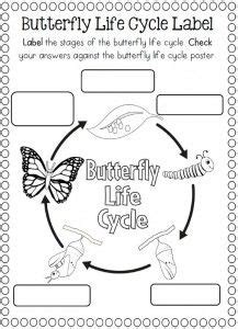 cycle of a butterfly coloring page school stuff 912 | 10c47e9ce41ecf02684947466b995055