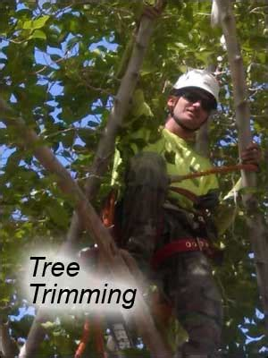 Tree Service Las Vegas And Henderson Nevada  Mr Tree Lv. Why Invest In Gold Now Expert Plumbing Tucson. Argentina Plastic Surgery Portfolio Web Sites. Manta Security Management Recruiters. Riversource Flexible Annuity. Prudential Term Insurance On Campus Colleges. Buy Stock Directly From Company. Dentist Reviews Colorado Springs. Virginia Universities And Colleges