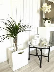 Plante De Salon : plante verte salon photo de fleur une pensee fleuriste ~ Teatrodelosmanantiales.com Idées de Décoration