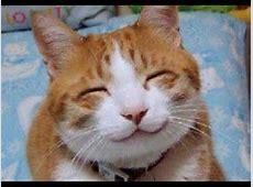 Lustige Katze Top 10 Katzen fails, Katzen #3 YouTube