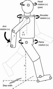Control And Function Of Arm Swing In Human Walking And