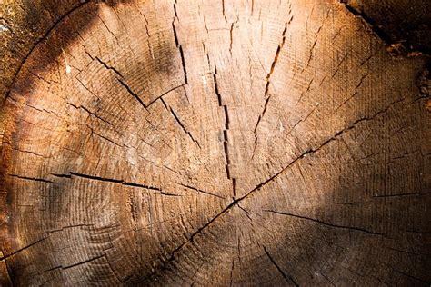 log wallpaper   texture  logs wallpapersafari