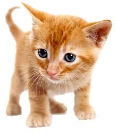 how to clean cat urine caro gattino lezione di vita da un gatto adulto e saggio