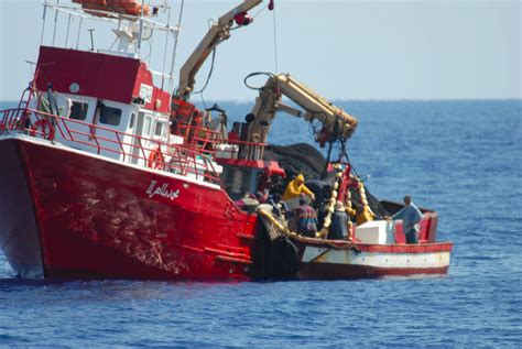 Tuna Boat Cost by High Risks Of Fraudulent Bluefin Tuna Fishing In North