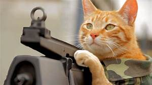 Funny Cats With Machine Guns Widescreen 2 Hd Wallpapers ...
