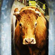Tvr Machecoul : la d coupe de viande tvr ~ Gottalentnigeria.com Avis de Voitures