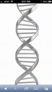 107 best images about dna on Pinterest | Trees, Dna and ...