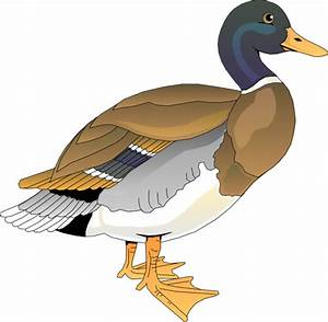 Free to Use & Public Domain Duck Clip Art