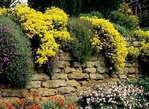 alysse planter et cultiver ooreka With modeles de rocailles jardin 4 gypsophile planter et cultiver ooreka