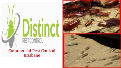 Ppt  Commercial Pest Control Brisbane Powerpoint. Hipaa Whistleblower Reward Managed It Service. Foreclosure Or Short Sale One Degree Capital. Mortgage Lead Generation Websites. Transfer Balance Credit Cards. Best Stock Trading Site Hawaii Cruise Package. Website Development Minneapolis. Free Advertising Online For My Website. Home Based Business Insurance Quotes