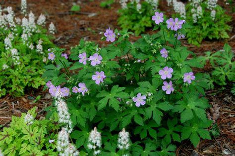Native Plants For Northeast Gardens Hgtv