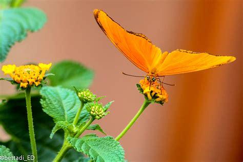 farfalle e fiori fiori e farfalle foto immagini macro e up macro