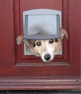 Pets options for doggie doors networx for Dog door options