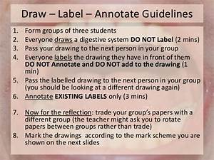 2 2 6 Digestive System Draw  Label  Annotate