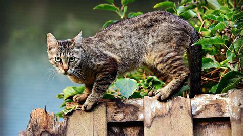 hausmittel gegen katzenurin katzenurin entfernen hausmittel gegen geruch und flecken utopia de