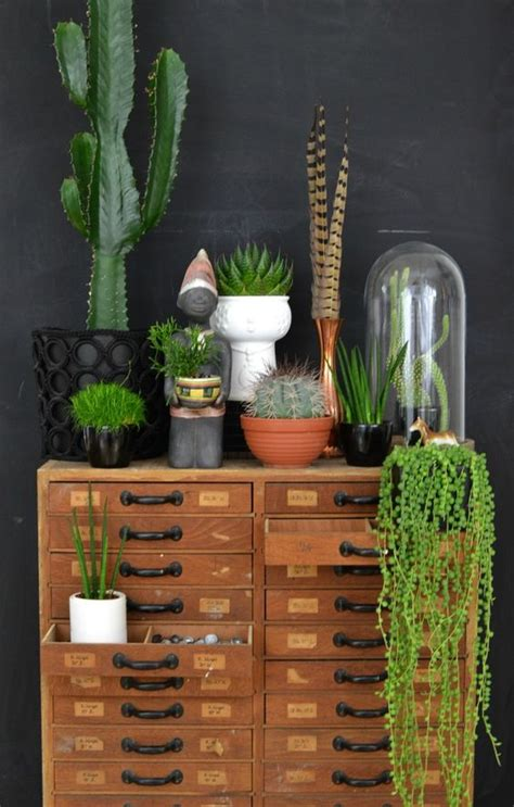10 Ways Work Cactus Trend by 10 Ways To Work The Cactus Trend Decoholic