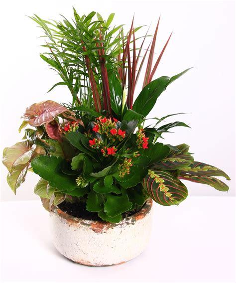 Ceramic Dish Garden  Rochester Florist Flowers