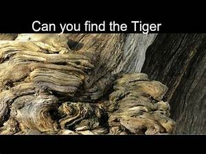 Nobody Can See All The Hidden Animals  U0964 Optical Illusion
