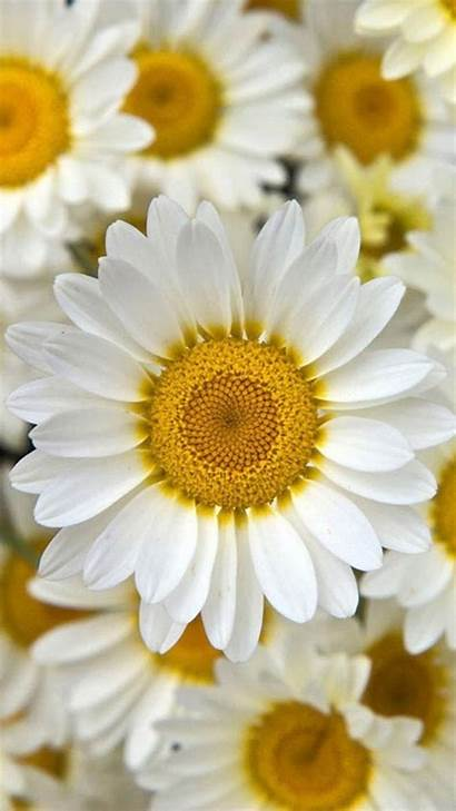 Iphone Flower Flowers Backgrounds Yellow Wallpapers Mobile