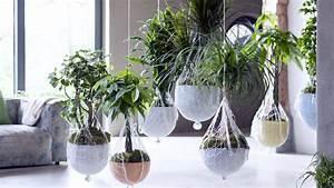 Grande Plante D Intérieur Facile D Entretien : grande plante interieur facile entretien ~ Premium-room.com Idées de Décoration