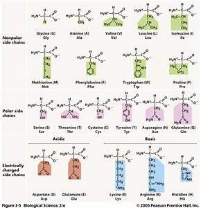 Topic 2 Molecular Biology  U2013 Abc Ib Biology