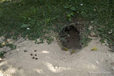 muehlviertelnaturat wildkaninchen das muehlviertel