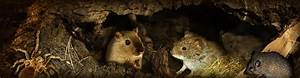 Tiere Unter Der Erde : zoo unter der erde tiere zum anfassen nah im zoo dresden ~ Frokenaadalensverden.com Haus und Dekorationen