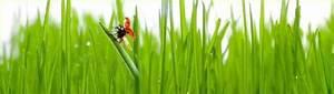 Rasen Düngen Bei Sonne : zu einem sch nen garten geh rt ein sch ner rasen ~ Indierocktalk.com Haus und Dekorationen