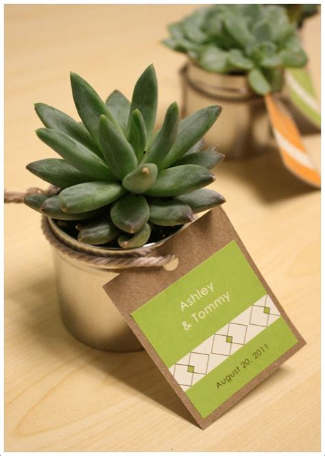 Best 25 Succulent Favors Ideas On Pinterest Succulent