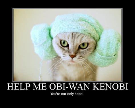 star wars cats ive   bad feline  thisstar