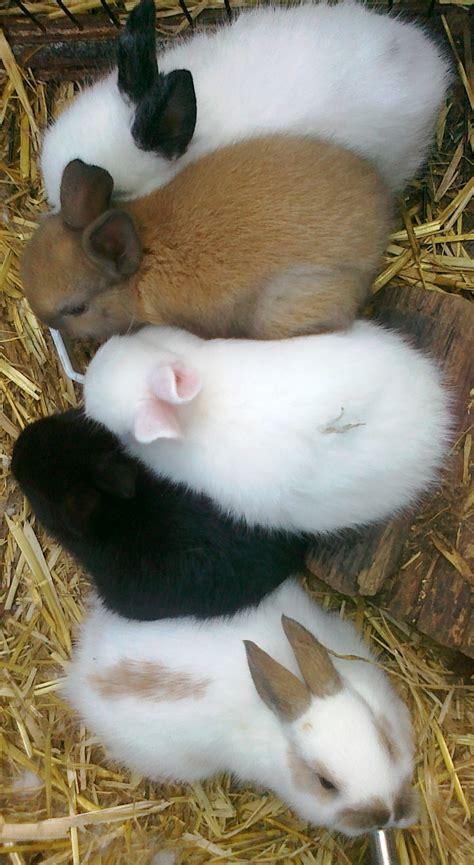 baby bunnies rabbits bunny pet farm rabbit born food kittens weeks week central raising
