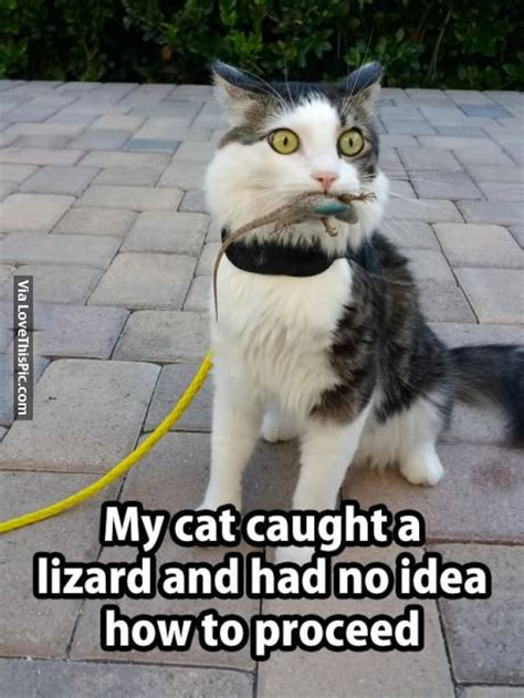 cat caught  lizard    idea   proceed