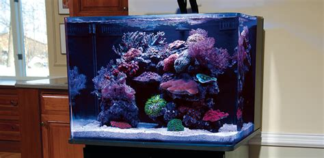 Aquascape Tank For Sale by Articles About Reef Aquariums Their Proper Care