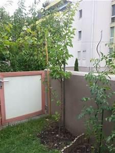 Aprikosenbaum Schnitt Forum : junger aprikosenbaum schnitt pflegen schneiden ~ Lizthompson.info Haus und Dekorationen