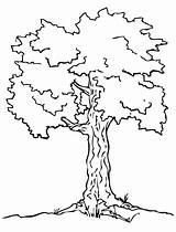 Coloring Tree Pages Preschool Elm Winter Printable Oak Pine Simple Getcolorings Template Trees Fallen Leaves Drawing sketch template